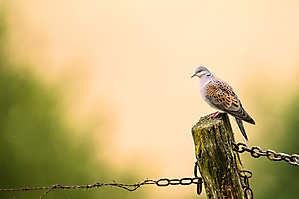 Liberté chérie