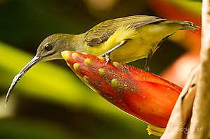 Sabah, Bornéo