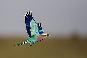 Vol de couleurs
