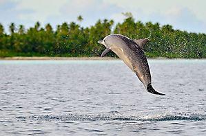 Et une vrille ! - Chagos
