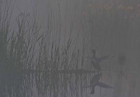 Réflechir dans le brouillard