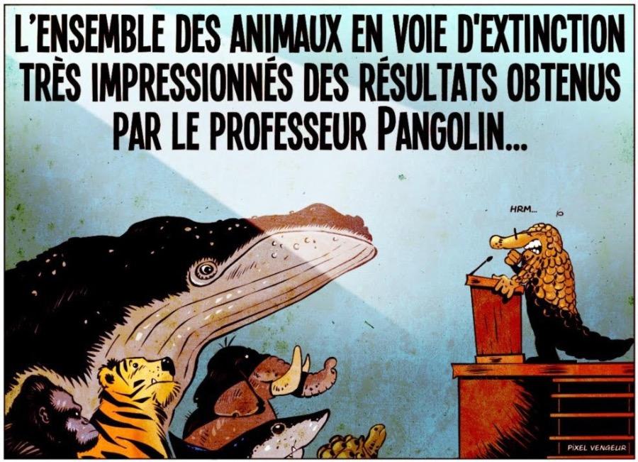 la_revanche_du_pangolin.jpg