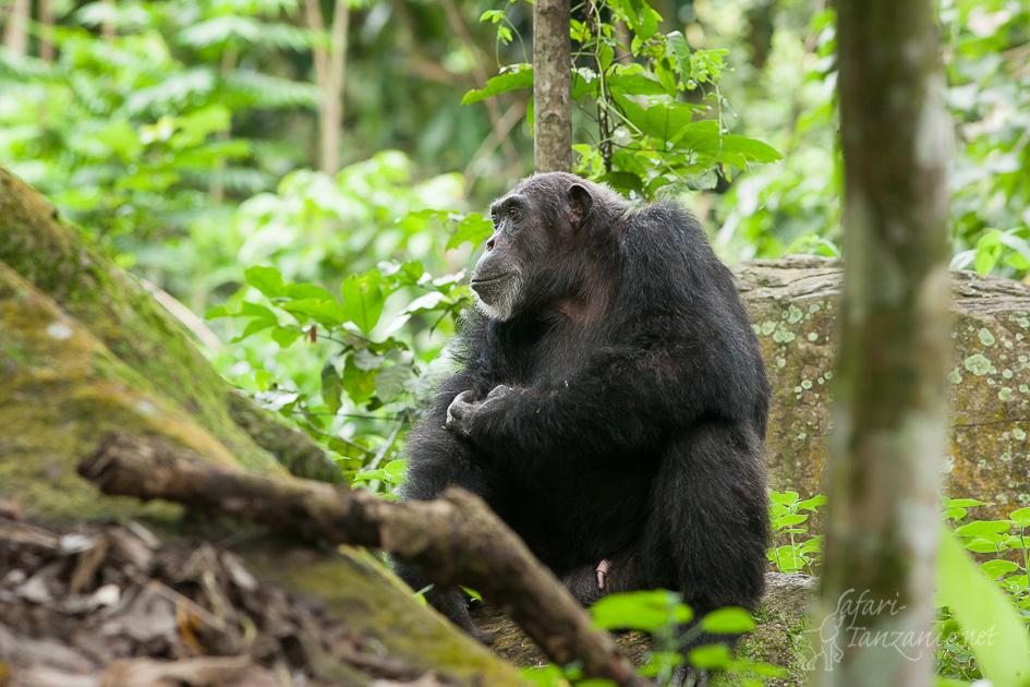 cat-chimpanze-7550.jpg