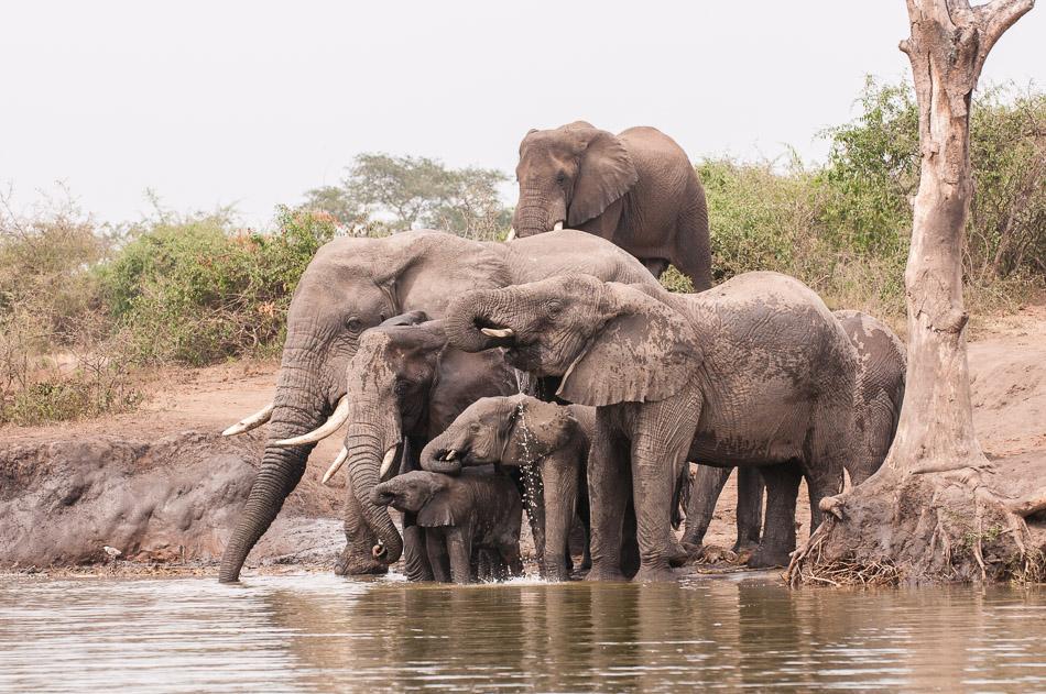Elephant-0194.jpg