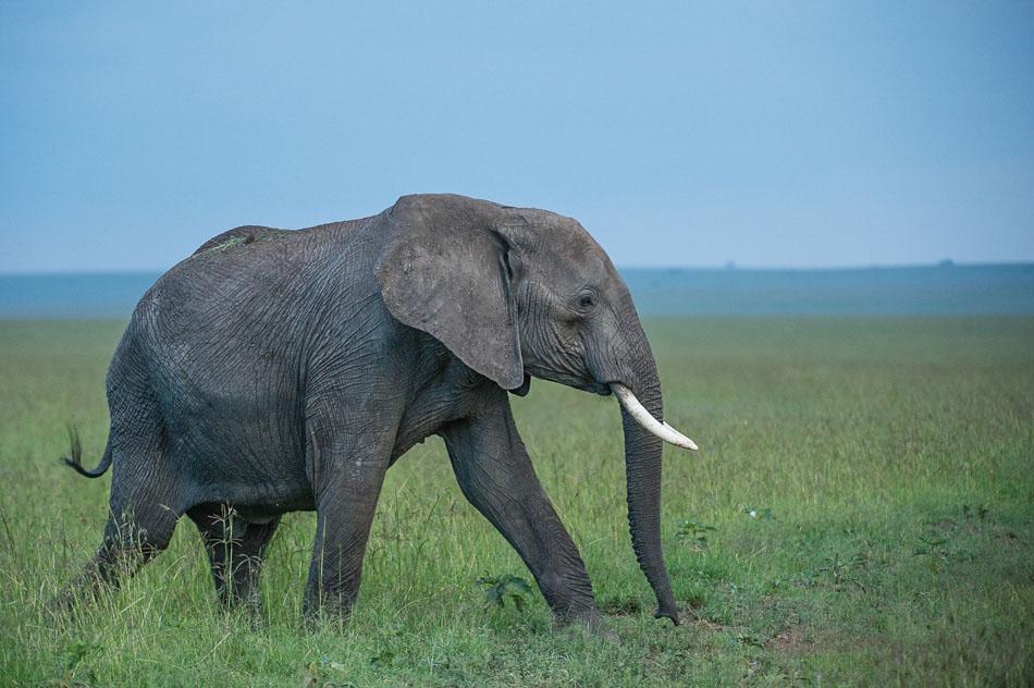 Elephant-3747.jpg