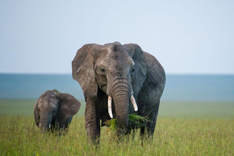 Elephant-3801.jpg