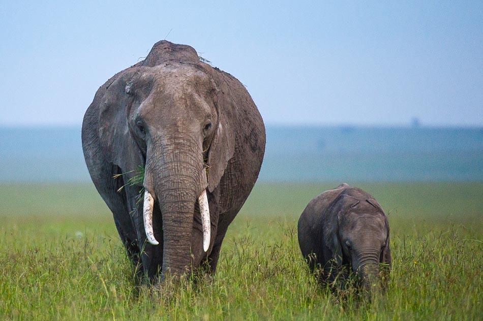 Elephant-3808.jpg