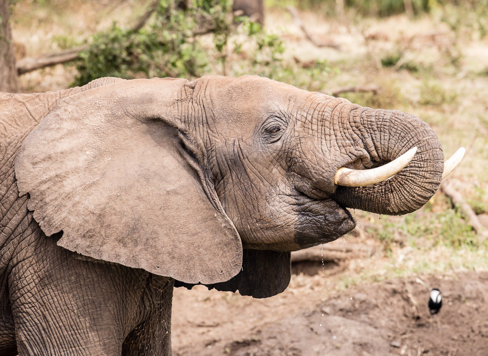 Elephant-4152.jpg