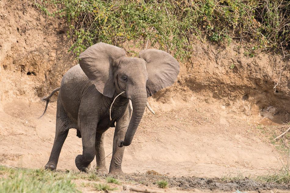 Elephant-4253_2015-01-24.jpg
