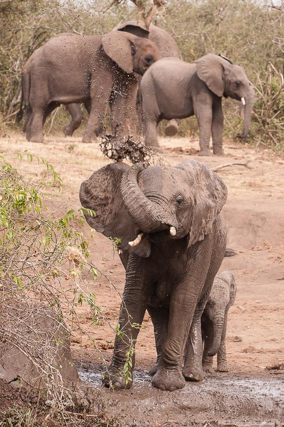 Elephants-0209.jpg