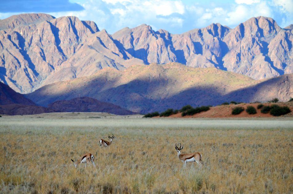 Springbok-montagne.jpg